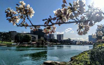 spring-blossom-rome-eur